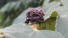 Deux insectes sur l'arbre images stock
