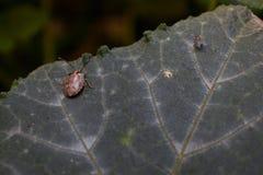 Deux insectes traînant sur une feuille photographie stock libre de droits