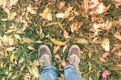 Deux jambes dans les jeans et des espadrilles l'herbe verte et l'automne tombé Images libres de droits