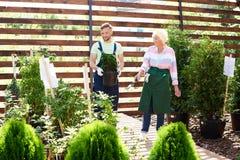 Deux jardiniers en serre chaude photographie stock libre de droits