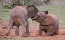 Deux jeunes amis d'éléphants saluant Images stock