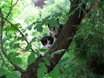 Deux jeunes chatons mignons tachetés se reposant sur un arbre regardent fixement l'appareil-photo photos stock