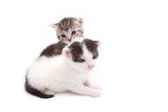 deux kitttens Image libre de droits