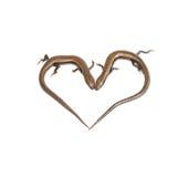 Deux lézards sous forme de coeur Image stock