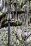 Deux lampes et mousse espagnole Photos stock