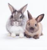 Deux lapins Images libres de droits