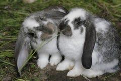 Deux lapins Image libre de droits