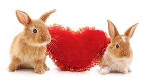 Deux lapins avec le coeur de jouet Images stock