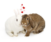 Deux lapins avec le contact de visages Images libres de droits