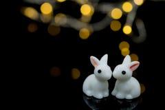 Deux lapins blancs Images stock