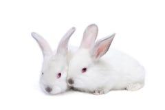 Deux lapins d'isolement blancs mignons de chéri Image libre de droits