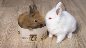 Deux lapins mignons de bébé avec des coeurs Photo stock