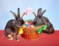 Deux lapins noirs essayent de s'élever dans le panier de Pâques Images stock