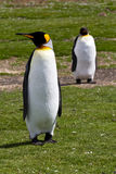 Deux le Roi Penguins Photo stock
