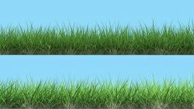 Deux lignes différentes de bandeau d'herbe rendent d'isolement sur l'élément de haute qualité bleu-clair de conception Images libres de droits