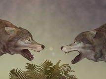 Deux loups. Dialogue. Image stock