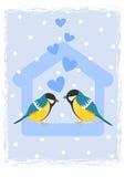 Deux mésanges dans le câble d'alimentation d'oiseau Photo stock