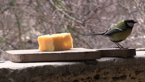 Deux mésanges mangent du fromage clips vidéos