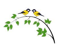 Deux mésanges sur un arbre Photo stock