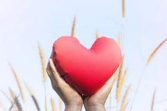 deux mains doucement soulèvent et tiennent le coeur rouge avec amour et le respectent avec le fond du ciel Photos stock