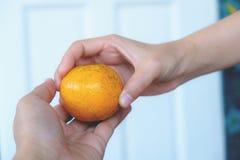Deux mains et fruit orange, femmes remettent les mandarines de offre Photo stock