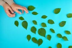 deux mains femelles d'une jeune fille avec la peau lisse et les feuilles vertes dispers?es photographie stock libre de droits