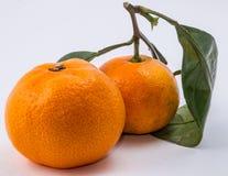 Deux mandarines sur le fond blanc Image stock