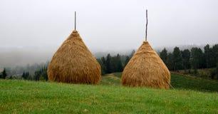 Deux meules de foin sur le pré, près de pinforest aux montagnes carpathiennes, la Roumanie photo stock