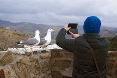 Deux michahellis méditerranéens de Larus de mouettes se tiennent sur le mur en pierre de la vieille forteresse Un homme photograp photo stock