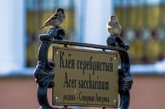 Deux moineaux sur l'indicateur en parc de la ville de Gomel (Belarus) Image libre de droits