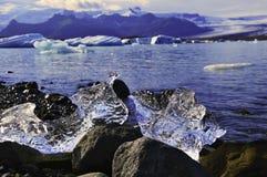 Deux morceaux de glace de fonte en Islande Images stock