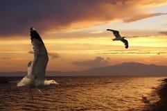 Deux mouettes au coucher du soleil Photo libre de droits