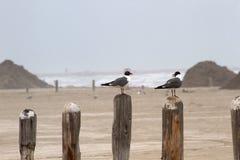 Deux mouettes se reposant sur un pilier signalent donner sur l'océan Photos stock