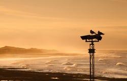Deux mouettes sur le fléau au coucher du soleil Photos libres de droits