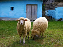 Deux moutons Image libre de droits