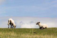Deux moutons dans la campagne photographie stock