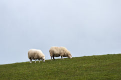 Deux moutons sur la colline Photos stock