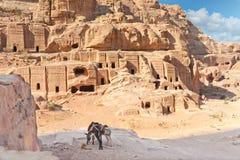Deux mules de paquet dans la ville antique Jordanie de PETRA Photos libres de droits