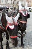 Deux museaux de cheval sur la vieille place Image stock