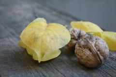 Deux noix brunes fraîches mûres juteuses se trouvent sur le fond des feuilles jaunes photographie stock