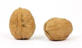 Deux noix sur un fond blanc Photo libre de droits