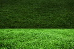 Deux nuances d'herbe verte Photo stock