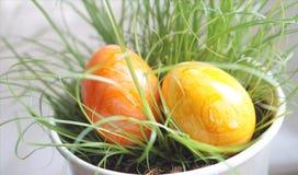 Deux oeufs de pâques cachés dans l'herbe dans le pot de fleur à d'intérieur Images stock