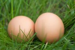 Deux oeufs de poulet se situant dans un nid d'herbe verte Photos libres de droits