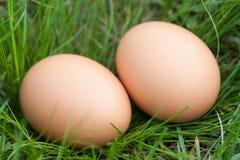 Deux oeufs de poulet se situant dans un nid d'herbe verte Photographie stock libre de droits