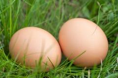 Deux oeufs de poulet se situant dans un nid d'herbe verte Image stock