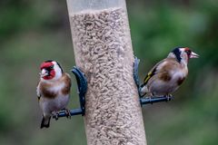 Deux oiseaux à un conducteur Photographie stock libre de droits