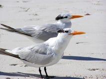 Deux oiseaux photo libre de droits