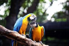 Deux oiseaux Images libres de droits