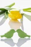 Deux oiseaux d'amants et tulipe jaune Jour heureux du `s de Valentine ! Photo libre de droits